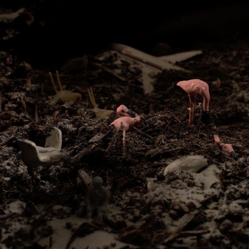 """Visuel de l'album """"Lead Bird"""" par Poupa Honk (2/6)"""