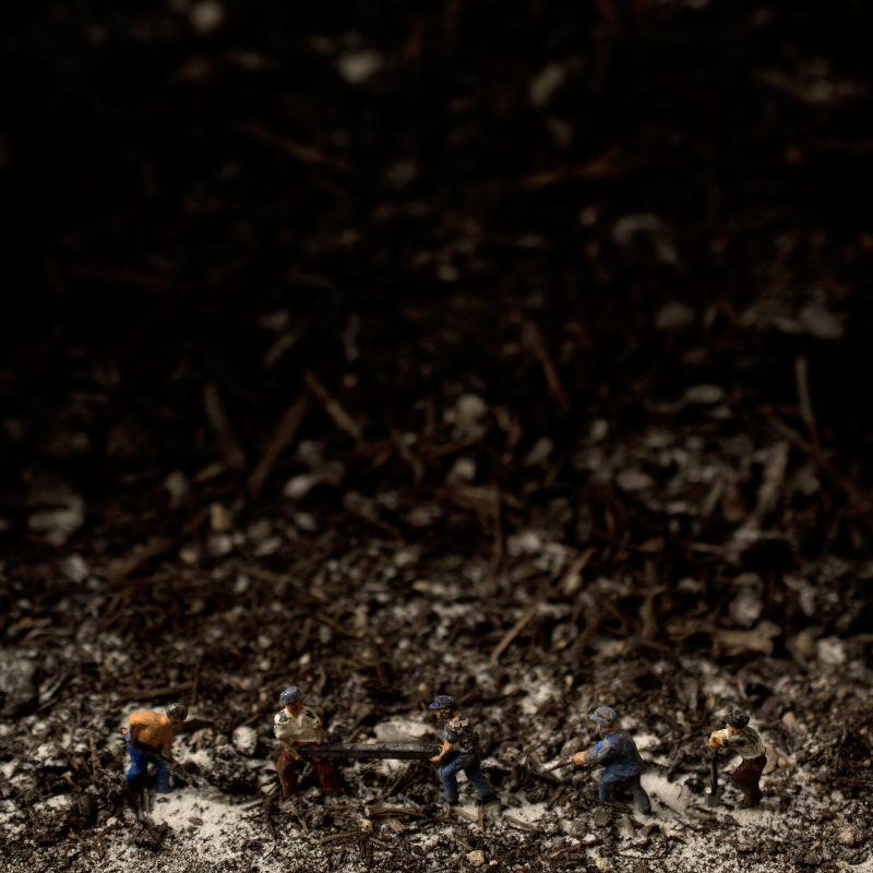 """Visuel de l'album """"Lead Bird"""" par Poupa Honk (6/6)"""